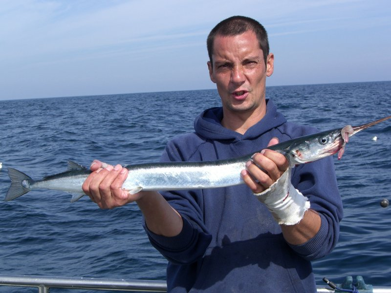 Garfish fishing photos in the bristol channel for Gar fish pictures