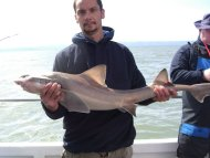 Smoothhound fishing in the Bristol Channel